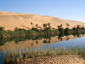 Un oasis