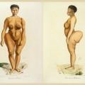 Dessein de la Vénus Hottentote