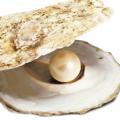 Perle dans une huite